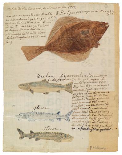 Verschillende soorten vissen, gevangen in de Matosjkin Sjar.