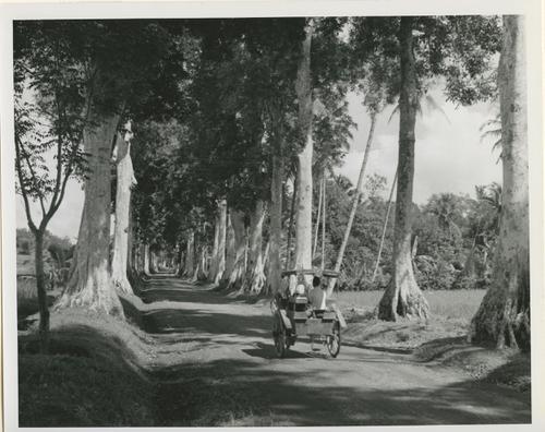 De weg naar Boroboedoer (Midden-Java)