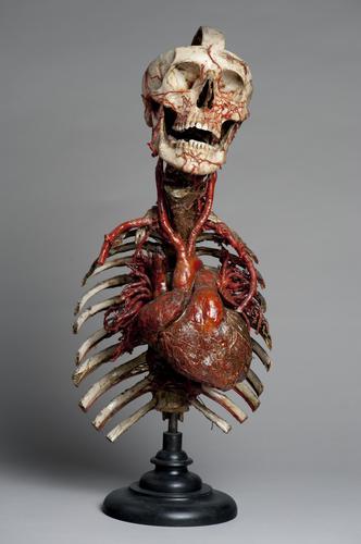 Deel van een skelet met opgespoten hart en bloedvaten