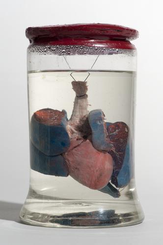 Preparaat van luchtpijp en longen