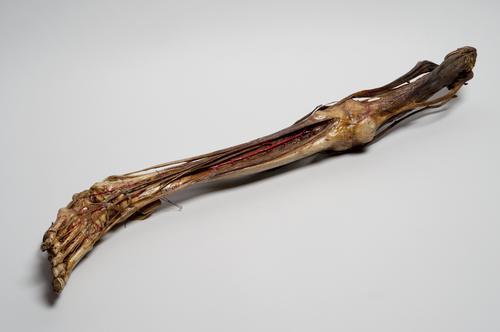Preparaat van een been