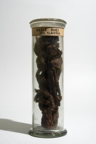 Droogpreparaat van de wortel van de medicinale rabarber