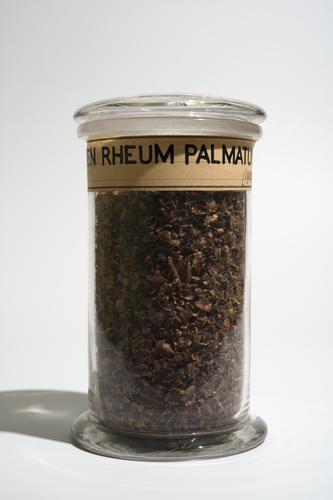 Droogpreparaat van het zaad van de medicinale rabarber