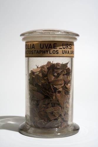 Droogpreparaat van de blaadjes van de beredruif