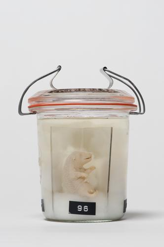 Embryo van egel