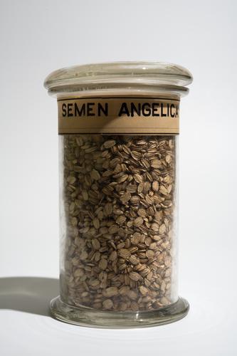 Droogpreparaat van witte zaden van de grote engelwortel