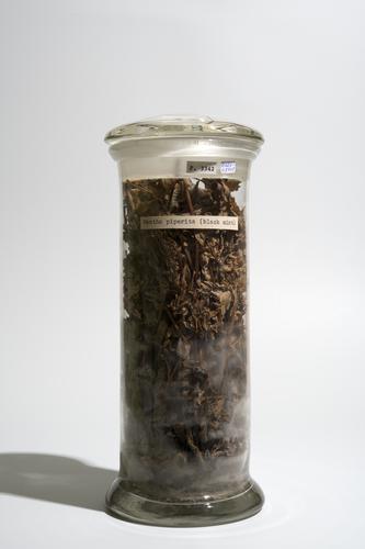 Droogpreparaat van de pepermuntplant