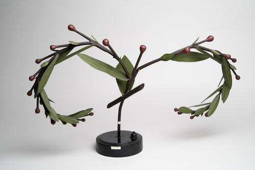 Model van bloeiwijze