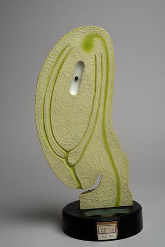 Papier-machémodel van een eitje van de teunisbloem