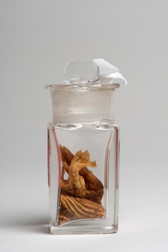 Chinees geneesmiddel van gedroogde maag van een zijdehoen