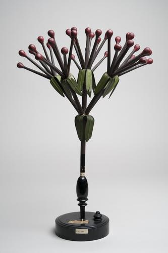Houten model van een bloeiwijze