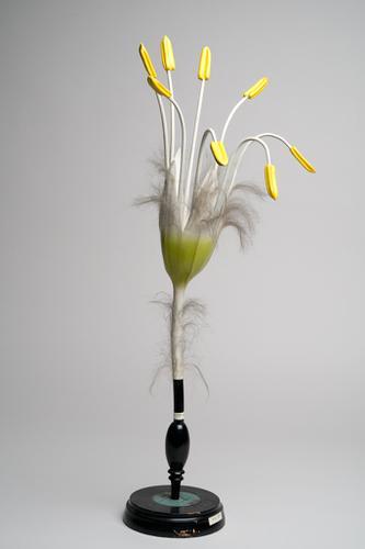 Papier-machémodel mannelijke bloem van de beuk