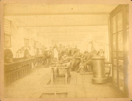 Foto van studenten in de anatomiezaal van diergeneeskunde