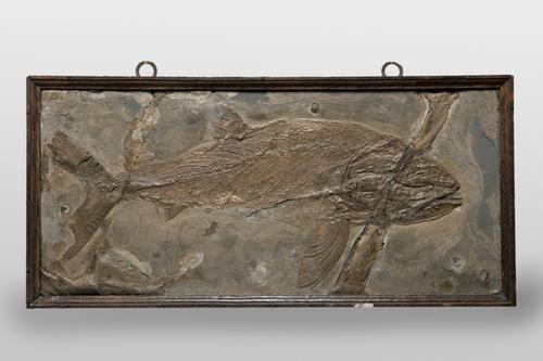 Fossiel van een vis