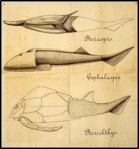 Drie vissen