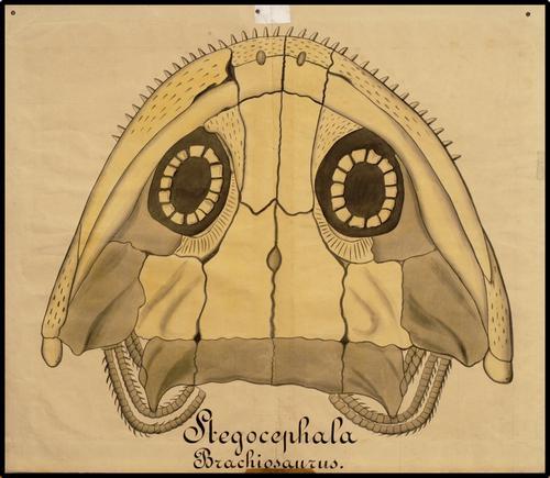 Stegocephala Brachiosaurus