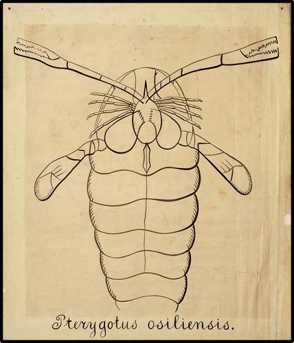 Pterygotus osiliensis