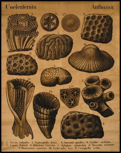 Zittel Palaeontologische Wandtafeln