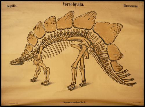 Palaeontologische Wandtafeln, K. Zittel