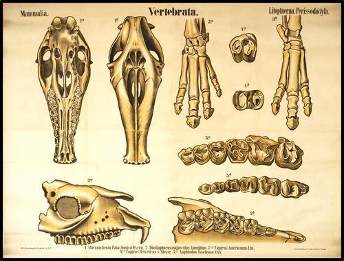Palaeontologische Wandtafeln, Zittel