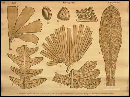 Palaeontologische Wandtafeln Reihe II, Zittel - Pompeckj - Salfeld