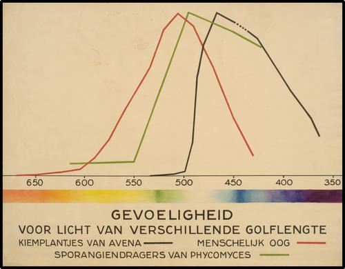 Gevoeligheid voor licht van verschillende golflengte