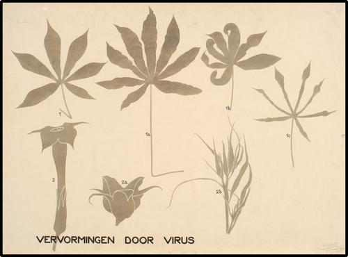 Vervormingen door virus