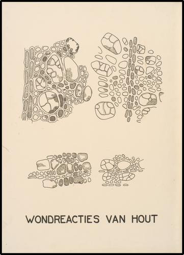 Wondreacties van Hout