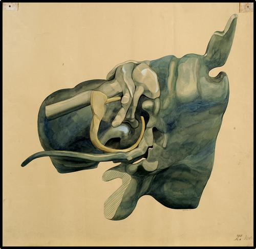 Anatomische onderwijsplaat