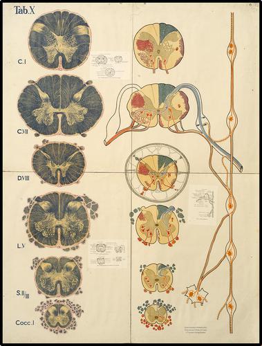 Icones neurologicae Strümpell & Jakob