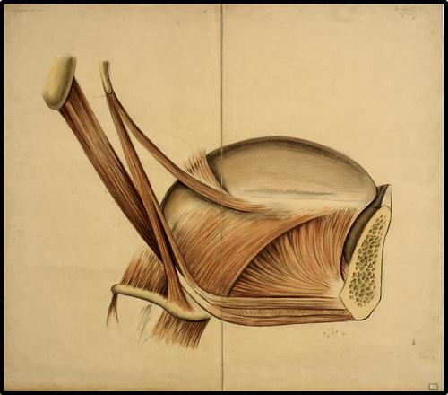 Tongspieren - onderspieren