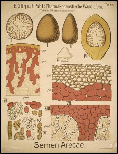 E. Gilg u. J. Pohl: Pharmakognostische Wandtafeln. (Tabulae Pharmacognosticae)