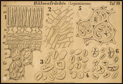 Wandtafeln für Warenkunde und Mikroskopie