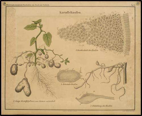 Pflanzenphysiologische Wandtafeln von Frank und Tschirch