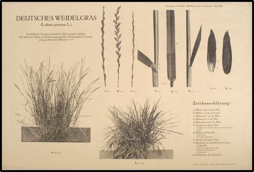 Wandtafeln der Gräserkunde
