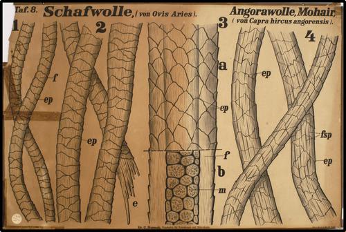 Wandtafeln für Warenkunde und Mikroskopie.