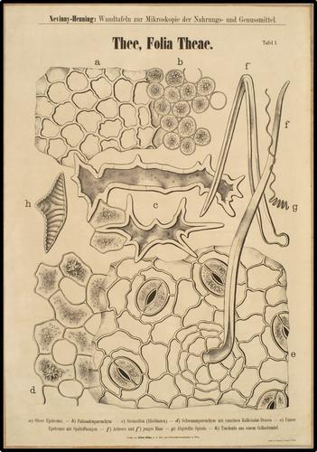 Nevinny-Henning: Wandtafeln zur Mikroskopie der Nahrungs- und Genussmittel