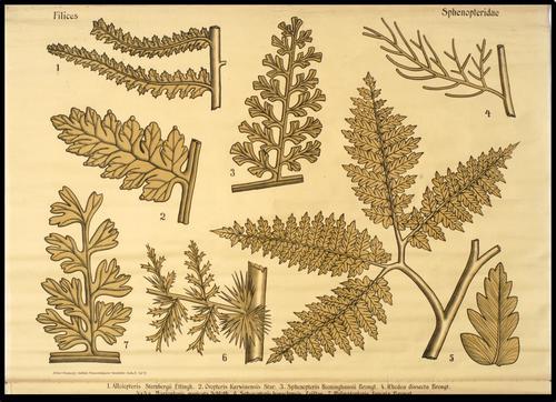 Zittel-Pompeckj-Salfeld, Palaeontologische Wandtafeln, Reihe II