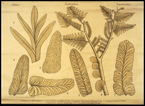 Palaeontologische Wandtafeln