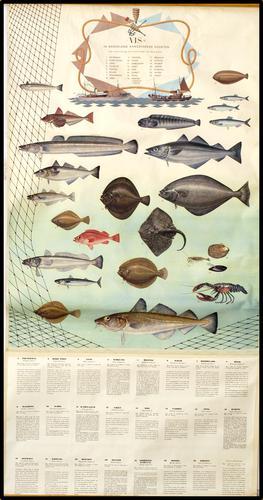 Vis. In Nederland aangevoerde soorten