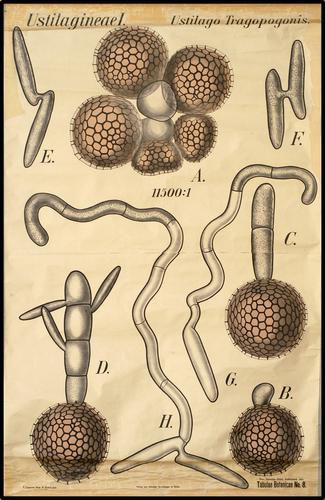 Tabulae Botanicae