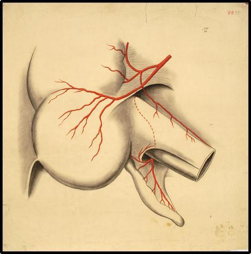 Onderwijsplaat anatomie