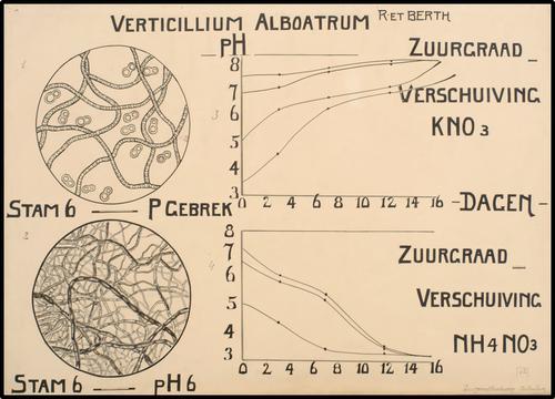 Verticillium Alboatrum