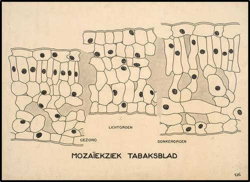Mozaiëk tabaksblad