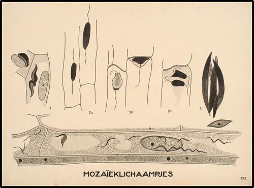 Mozaïeklichaampjes