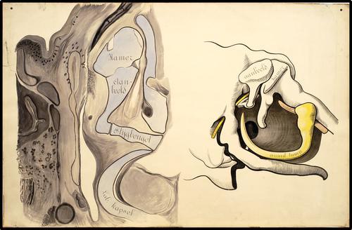 Schematische afbeelding van het binnenoor