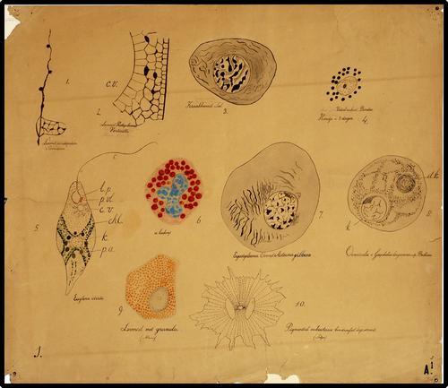 Verschillende celtypen