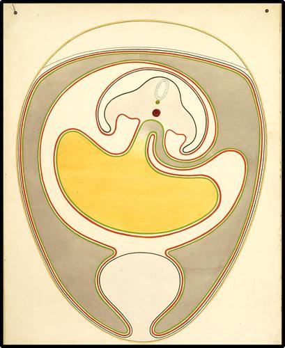 De embryonale ontwikkeling van de kip