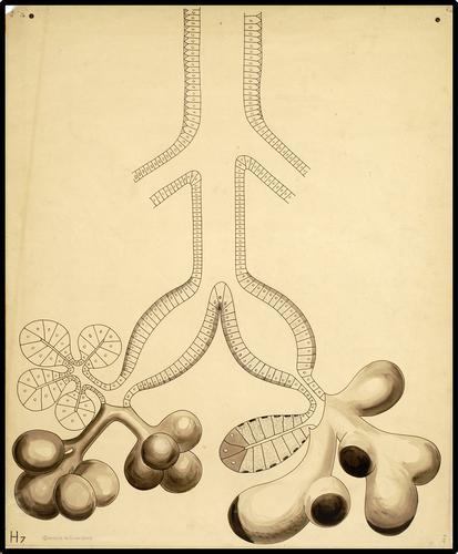 Glandula submaxillaris