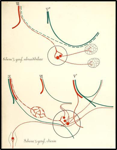 Schematische weergave van het ganglion